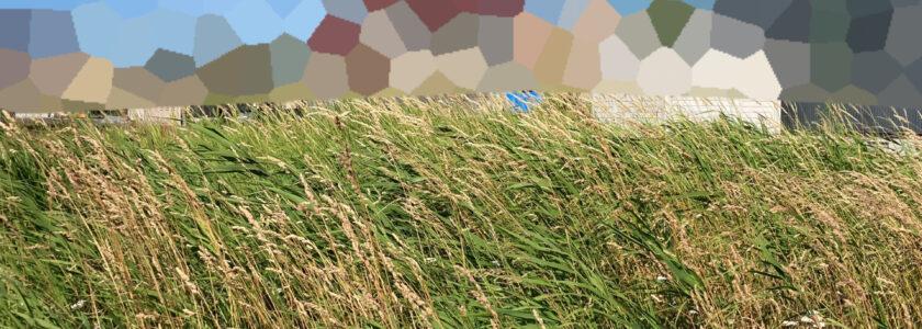 土地の引き渡し+雑草処理の話
